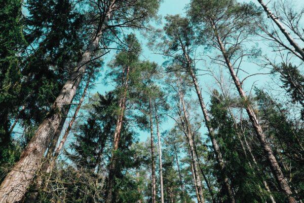 Joga camp – koszty, miejsce, wrażenia