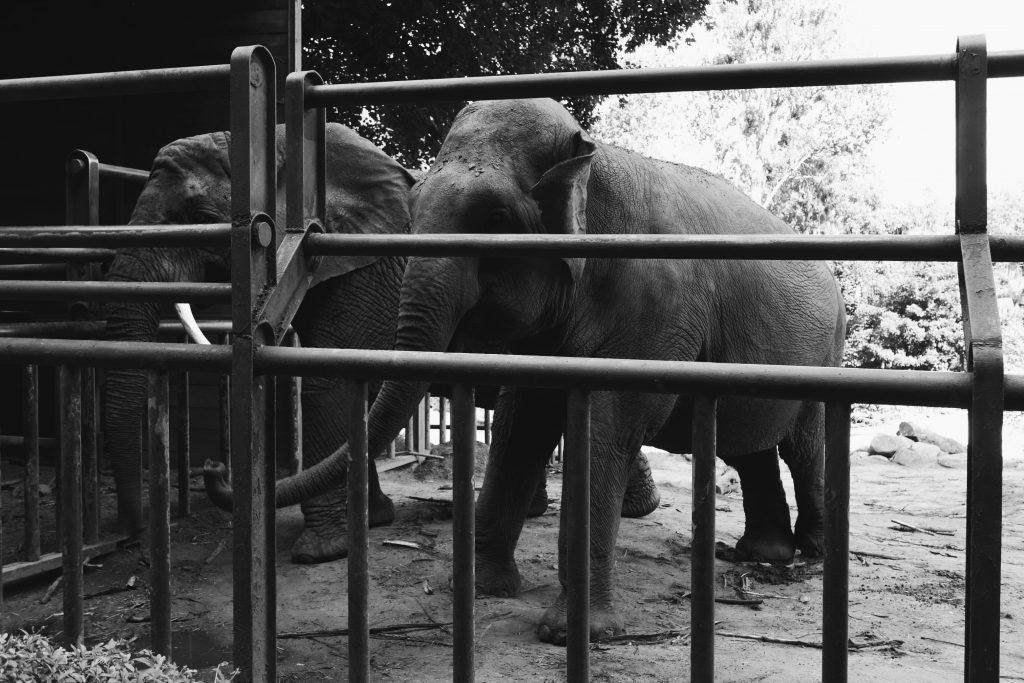 Gdańsk Zoo